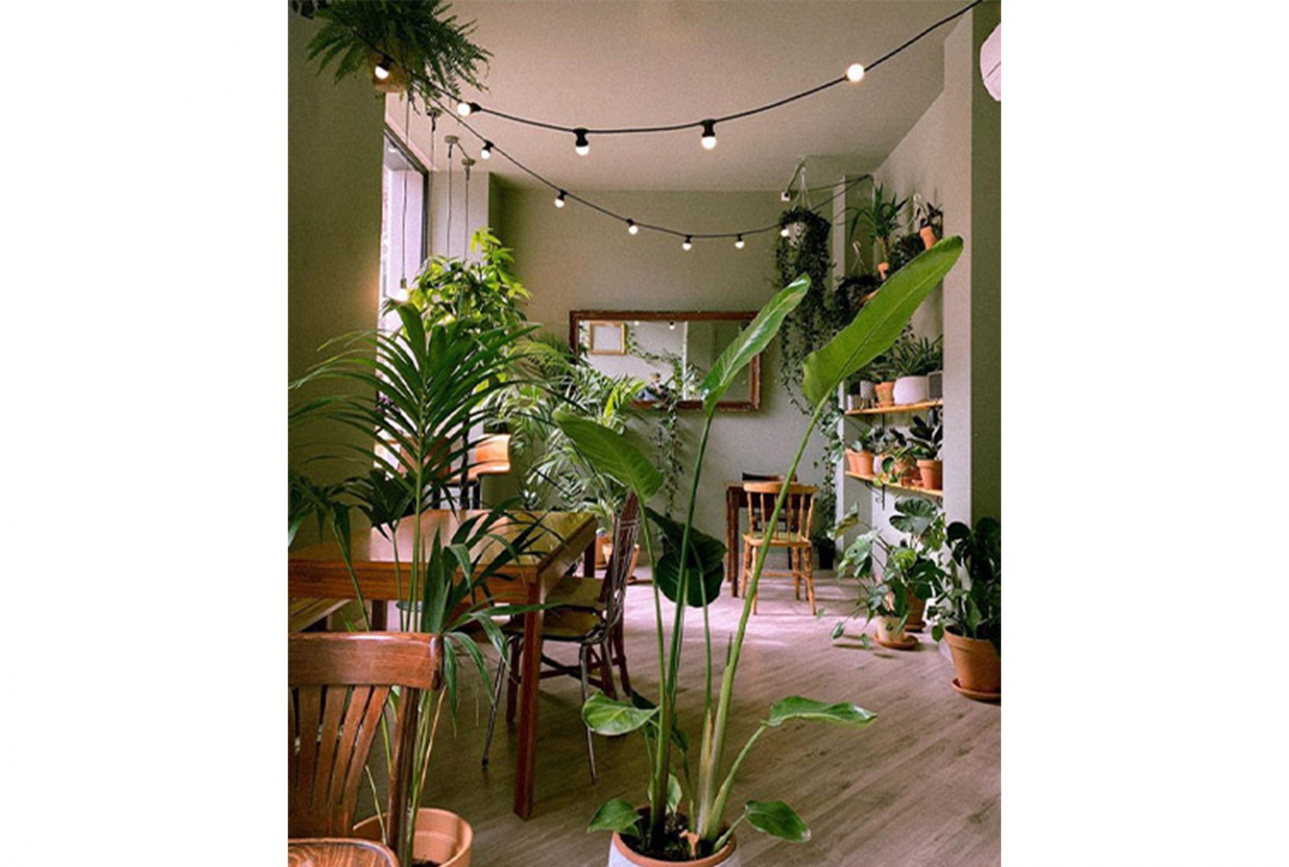 la suegra del jardinero, bar botánco, diseño retail eco friendly
